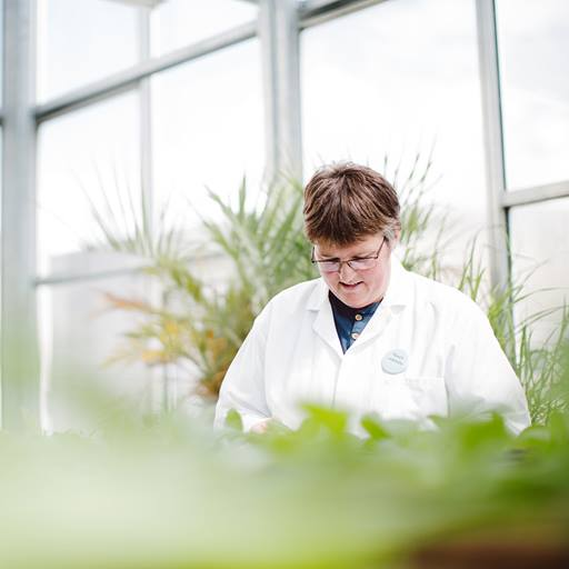 Researcher in greenhouse labs
