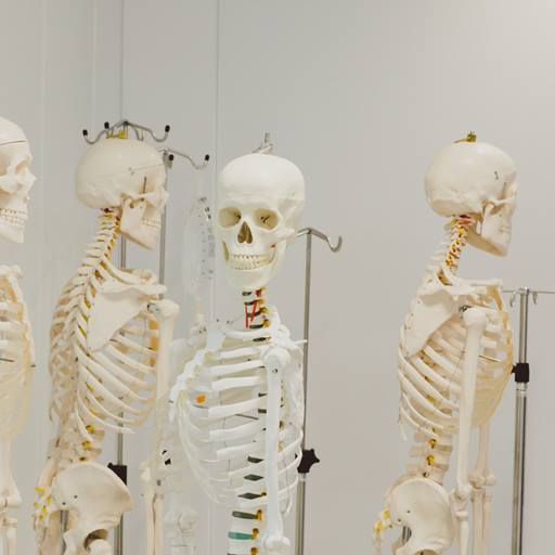 Four skeletons standing in a room.  One facing the camera