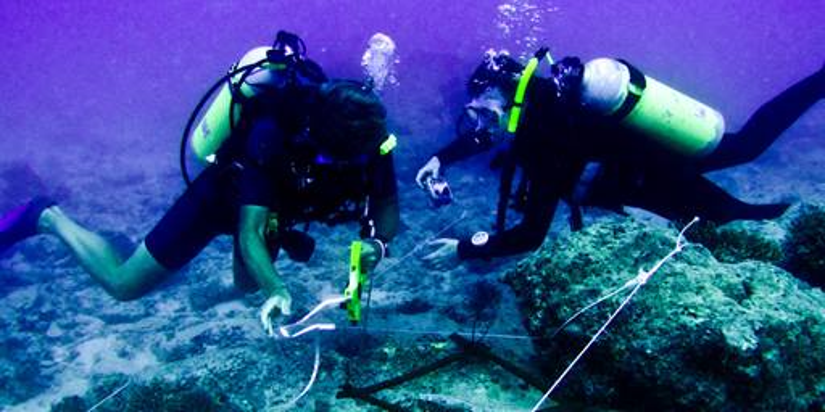 BSc Marine Biology - Marine Biology Degree   University of ...