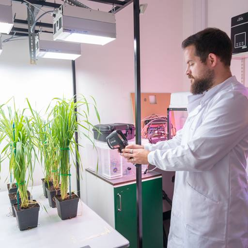 Student analysing plants