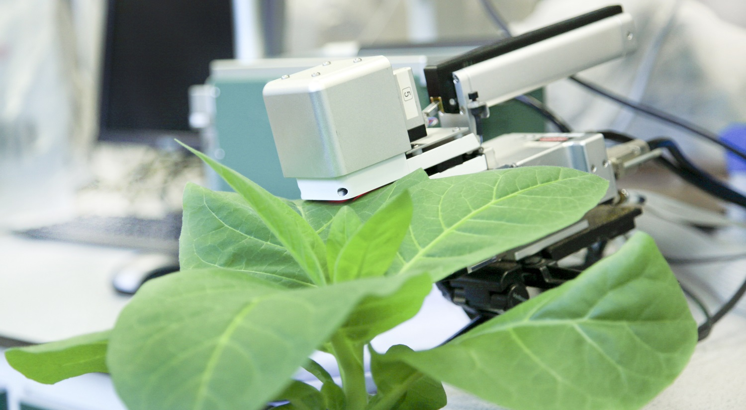 A LiCOR 6400 Infra-Red Gas Analyser (or IRGA) attached to a tobacco leaf.