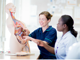 A nurse student and teacher looking at a model of internal organs