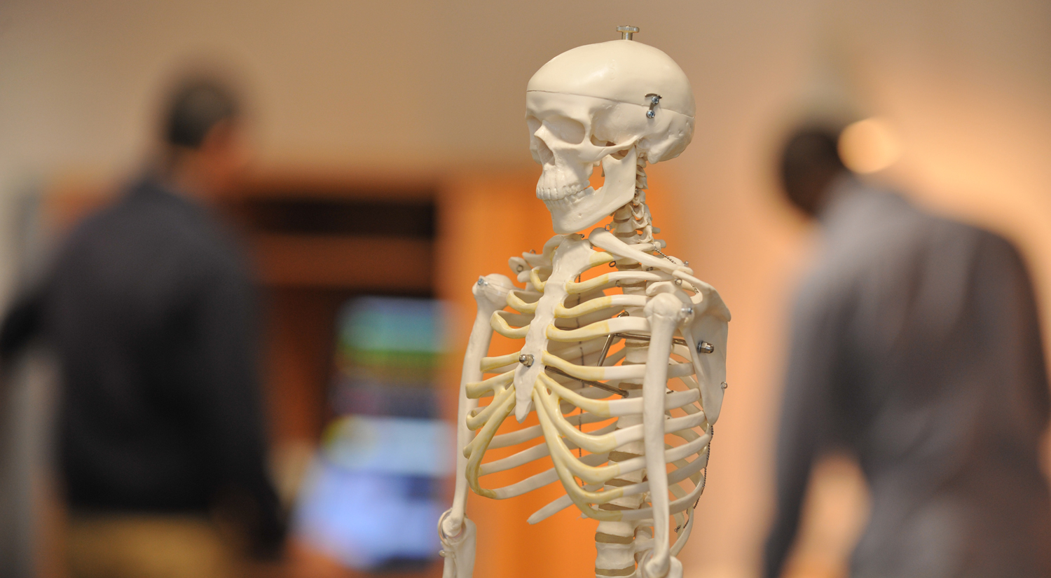 Skeleton in Physiotherapy lab
