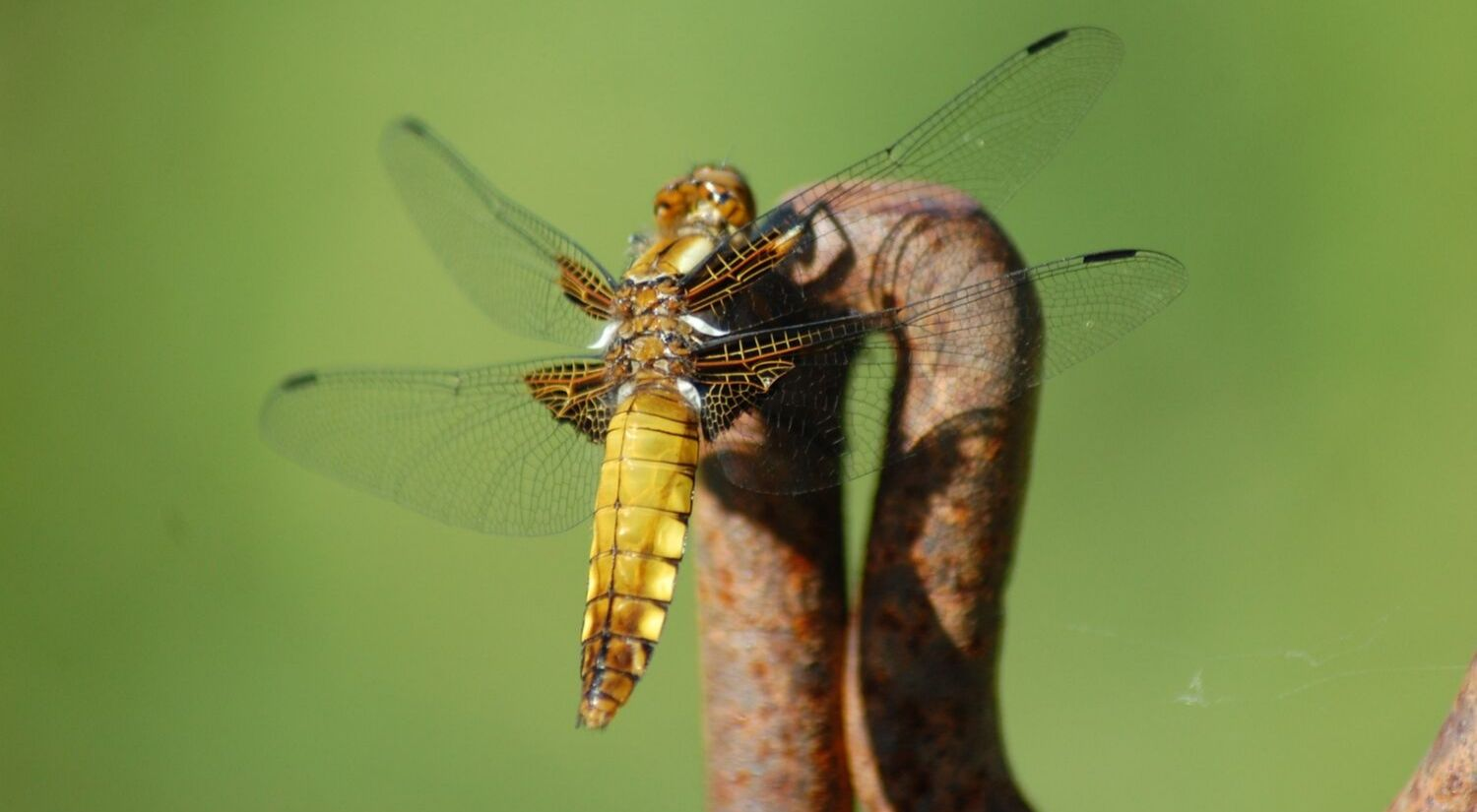 A photo of a dragonfly